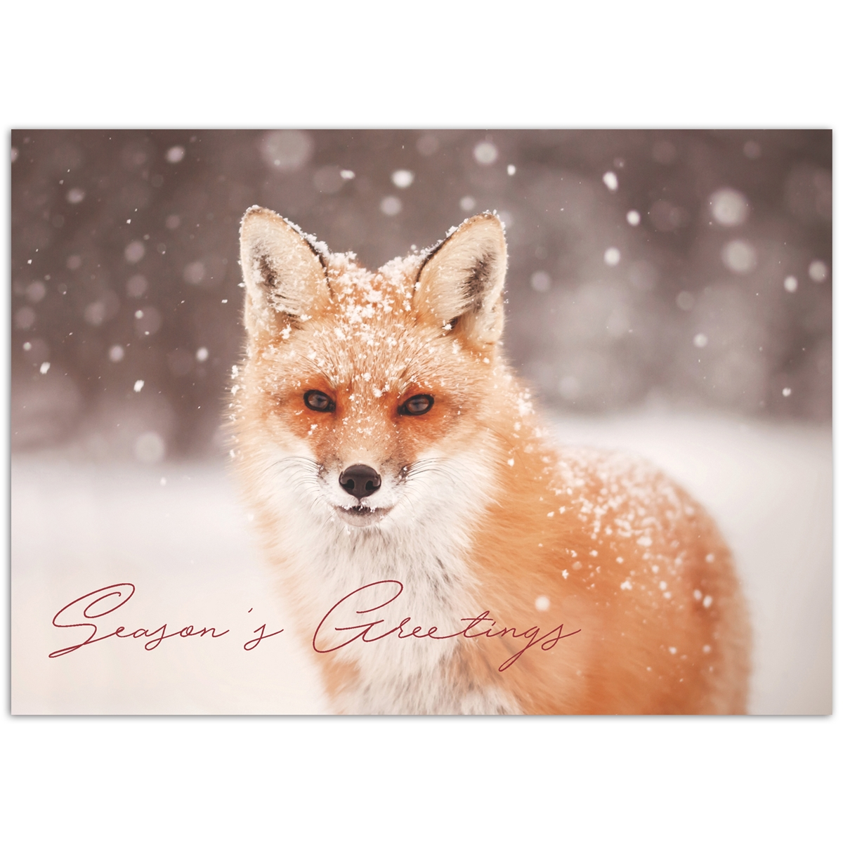 Red Fox in Falling Snow Card