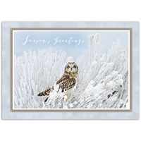 Short-Eared Owl Card
