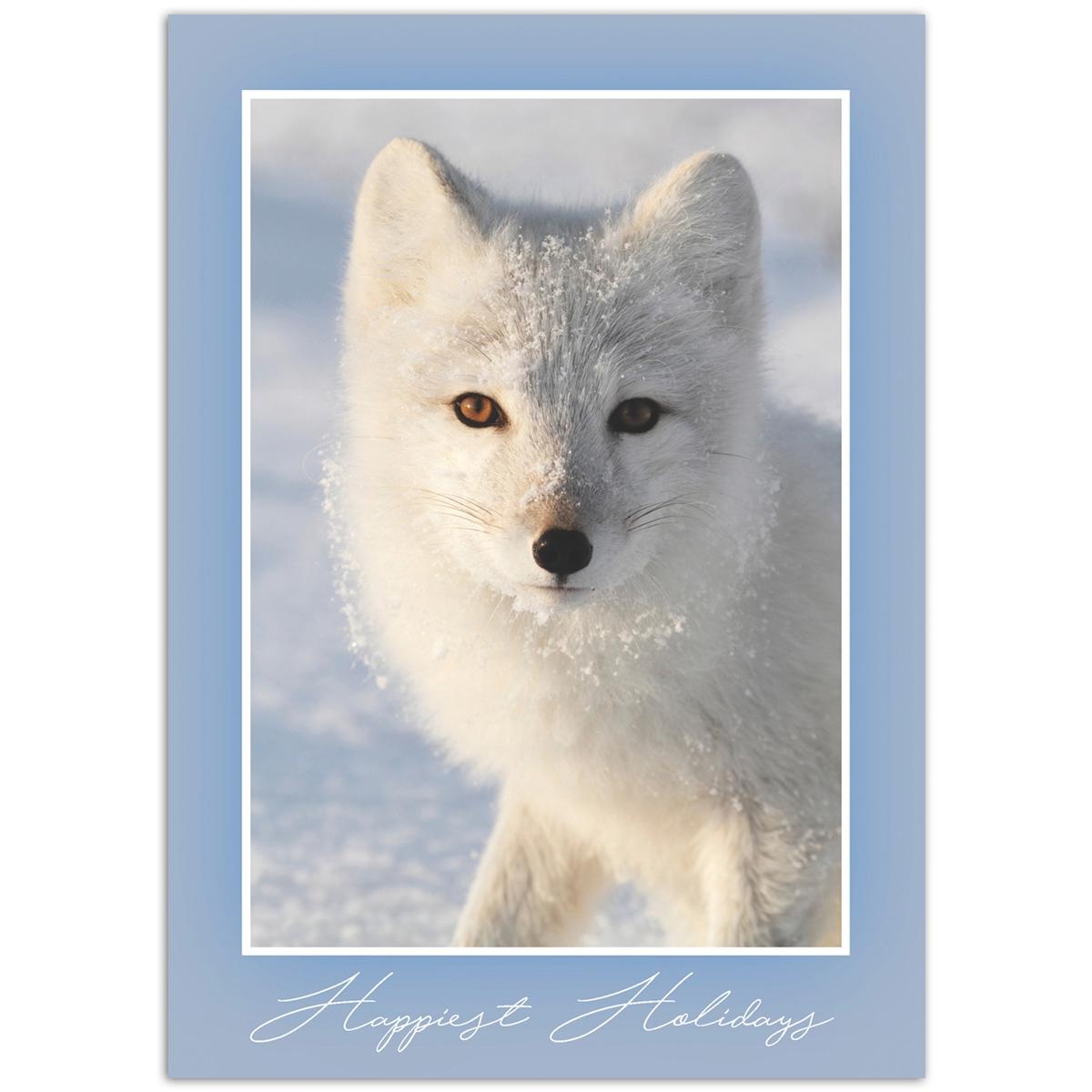 Arctic Fox Stare Card
