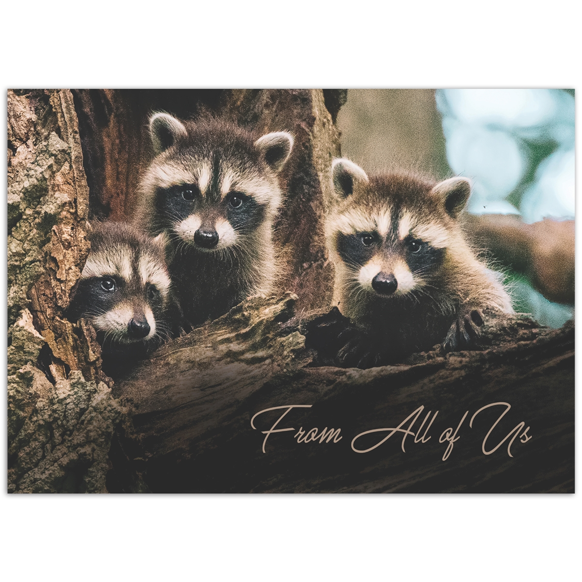 From All of Us Raccoons Card