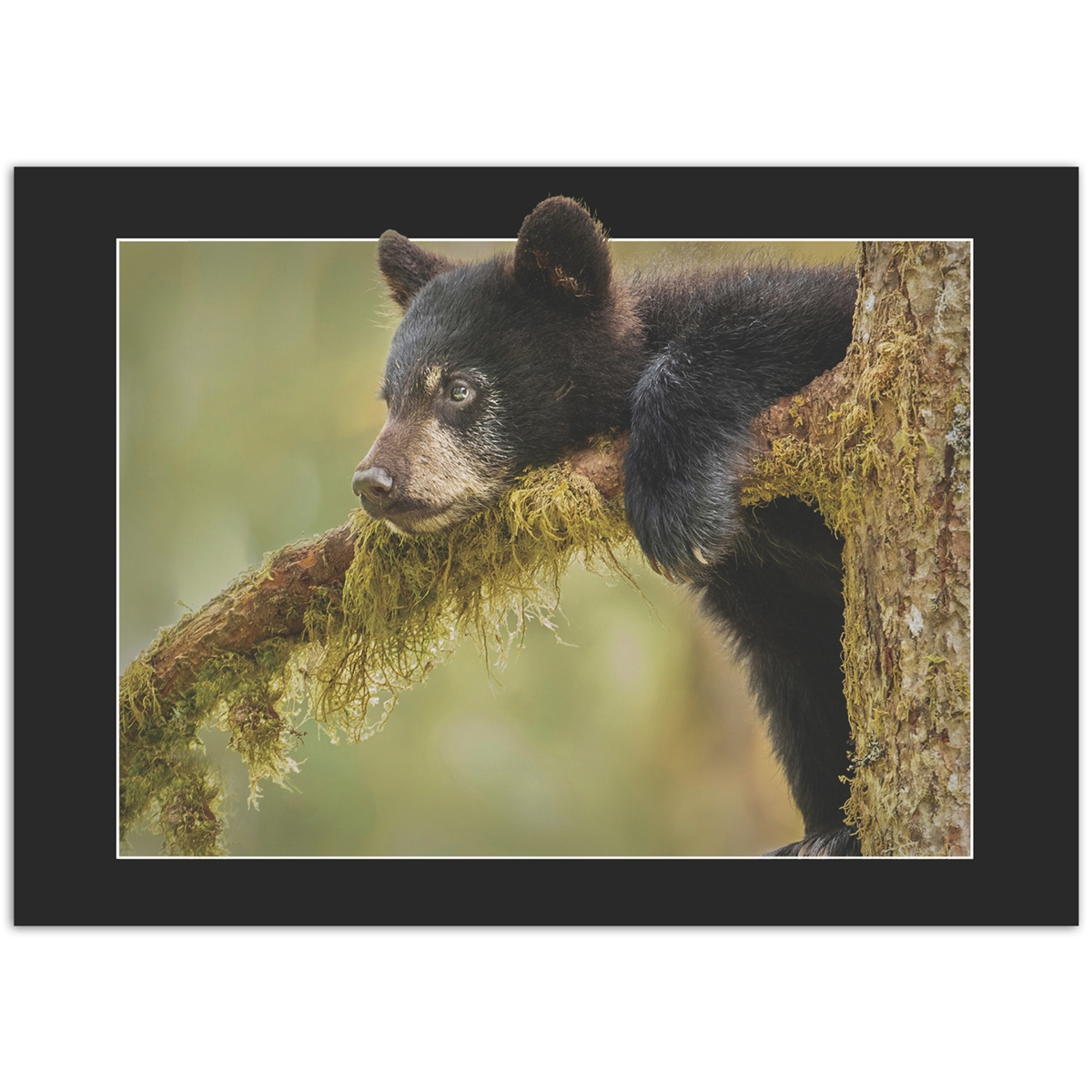 Black Bear Cub Trees for Wildlife Card