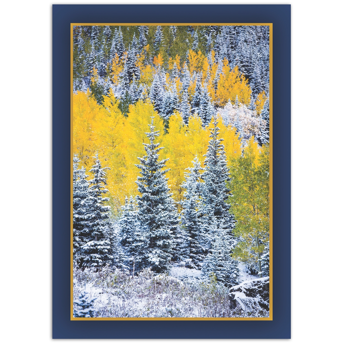 Aspen's Autumn Snow Trees for Wildlife Card