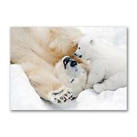 Polar Bear Play Holiday Cards