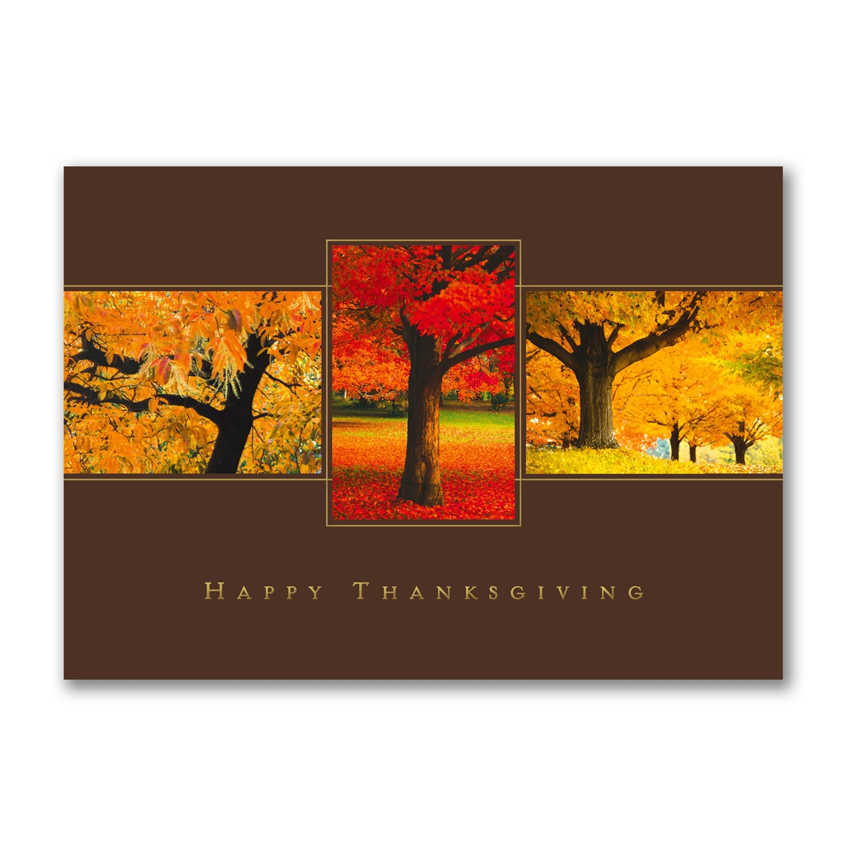 Thanksgiving Trio Holiday Cards