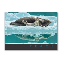 Seal Snuggle Holiday Cards
