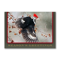 Pileated Woodpecker Holiday Cards