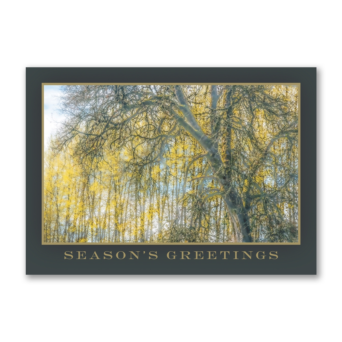 Williamette White Oak Trees for Wildlife Holiday Cards