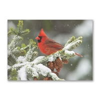 Cardinal in Winter Snow Holiday Cards