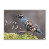 California Quail Holiday Cards