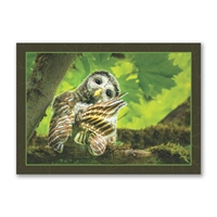 Barred Owlet Trees for Wildlife Holiday Cards