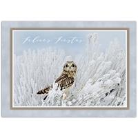Short-Eared Owl Card - Spanish