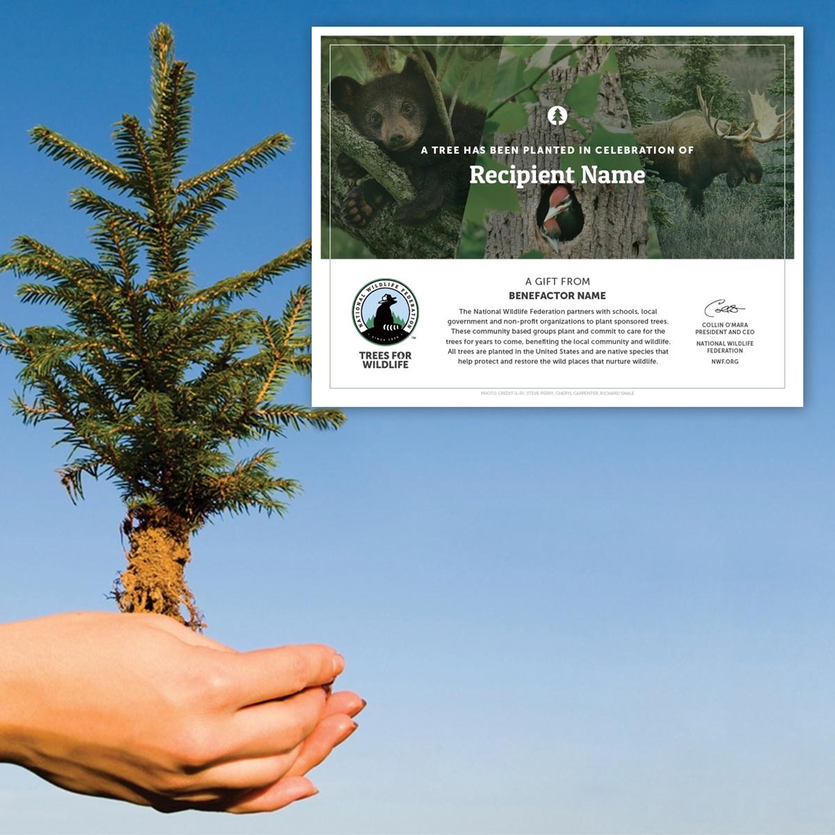 Tree Sponsorship - Memorial $10 - $150